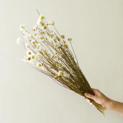 Dried Acroliunium Flower Bunch