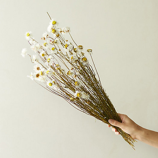 View larger image of Dried Acroliunium Flower Bunch