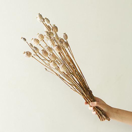 View larger image of Dried Papaver Bunch