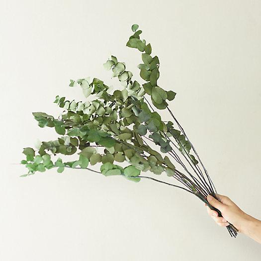 View larger image of Preserved Stuartiana Eucalyptus Bunch, Green