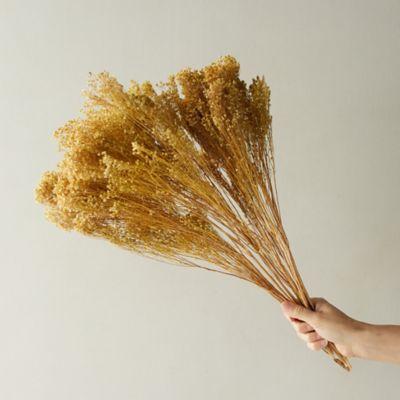 Dried Broom Bloom Bunch