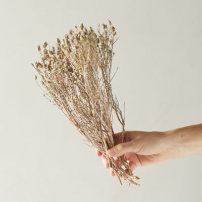 Dried Blooming Thyme Bunch