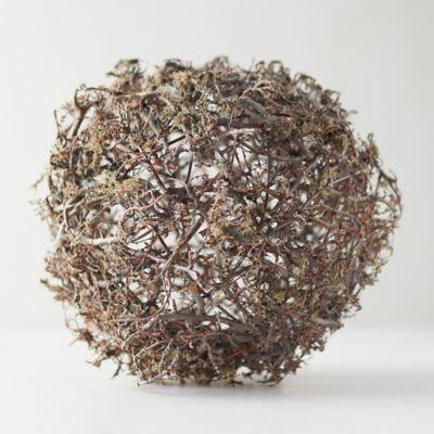 Wild Bonsai + Reindeer Moss Sphere