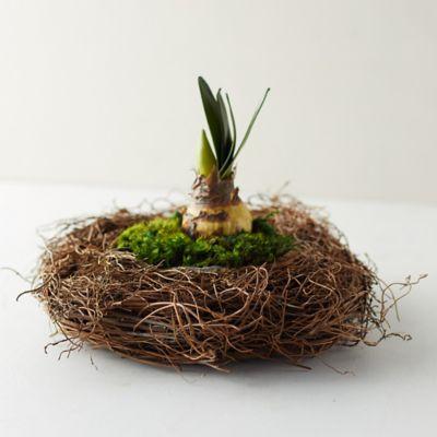 Fern Root Basket Pot