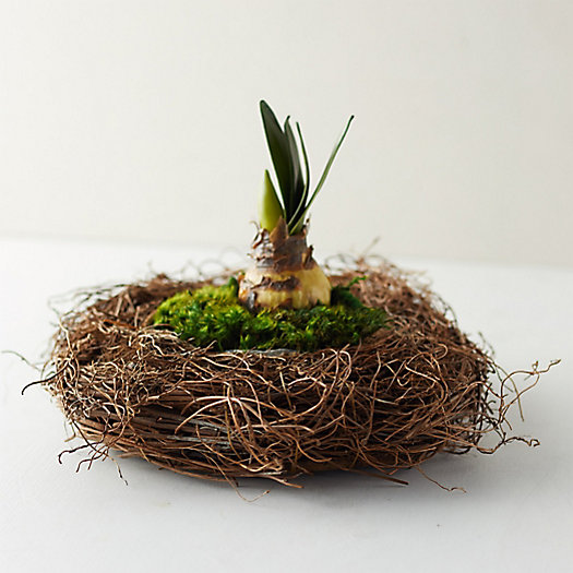 View larger image of Fern Root Basket Pot