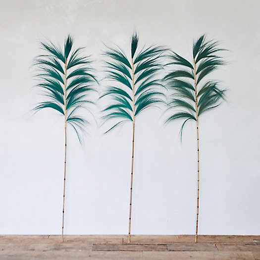 View larger image of Preserved Oversized Stems, Set of 3