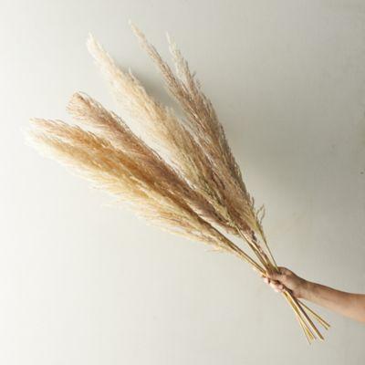 Dried Pampas Grass Bunch, Full