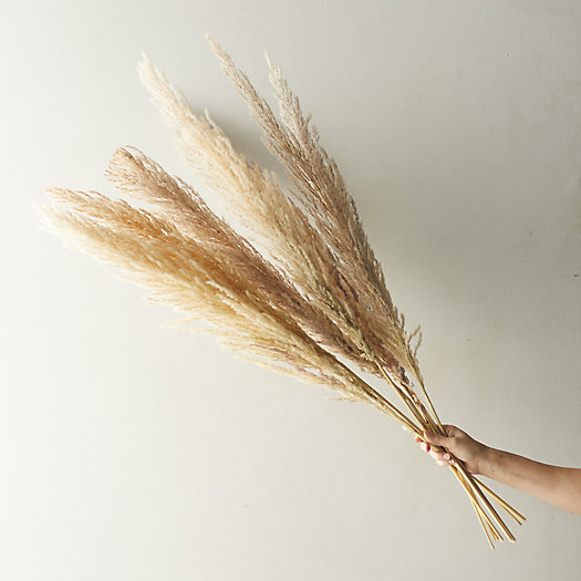 View larger image of Dried Pampas Grass Bunch