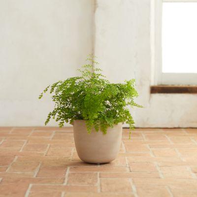 "Desert Concrete Pot, 11"""