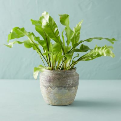 Earthy Ceramic Jar Planter