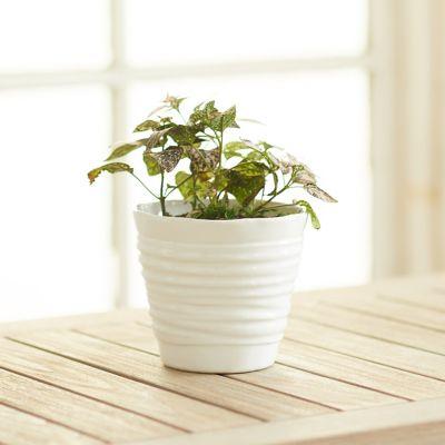 Organic Lines Pot