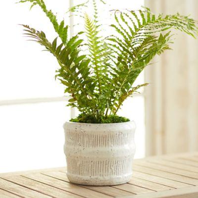 """Raised Lines Ceramic Pot, 7"""""""