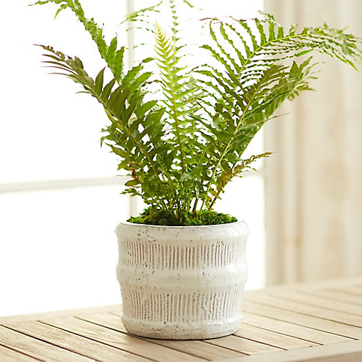 """View larger image of Raised Lines Ceramic Pot, 7"""""""