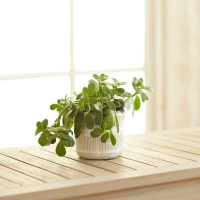 """Raised Lines Ceramic Pot, 6"""""""