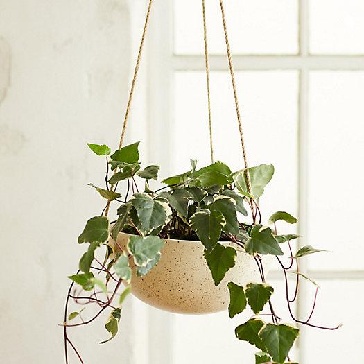 View larger image of Hanging Ceramic Bowl Planter