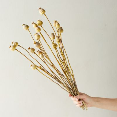 Preserved Papaver Bunch
