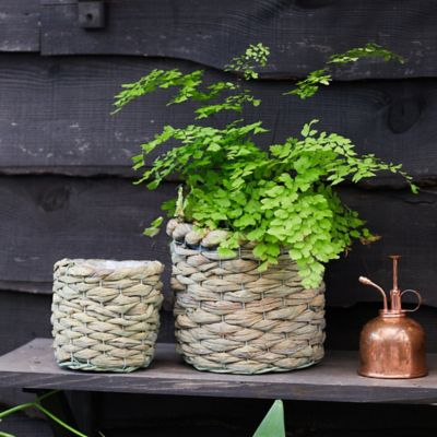 Braided Basket Pot
