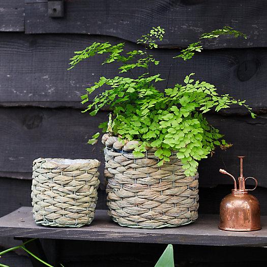 View larger image of Braided Basket Pot