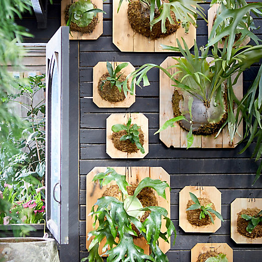View larger image of Mounted Staghorn Fern