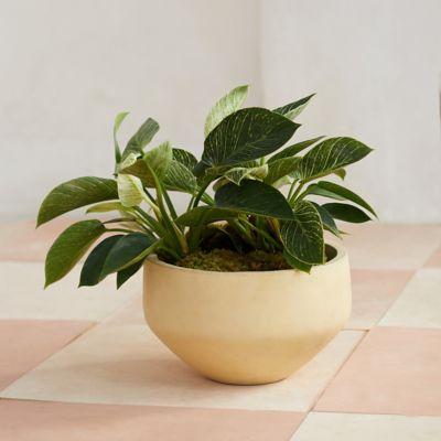 Fiber Cement Bowl Planter