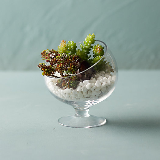 View larger image of Footed Spotlight Terrarium, Small