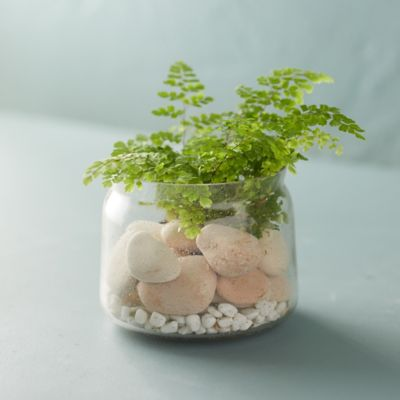 Bubble Glass Terrarium, Small