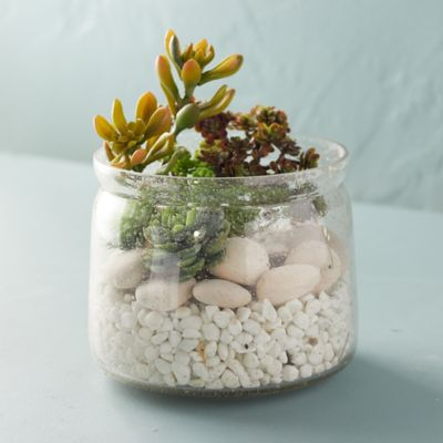 Bubble Glass Terrarium, Large