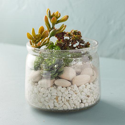 View larger image of Bubble Glass Terrarium, Large