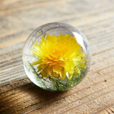 Resin Paperweight, Yellow Helichrysum