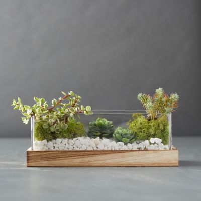 Wood Base Terrarium