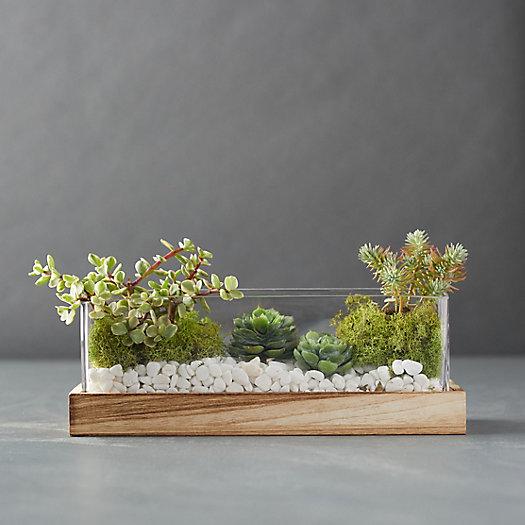 View larger image of Wood Base Terrarium
