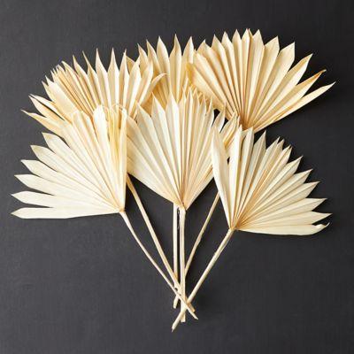 Preserved Sun Palm Bunch