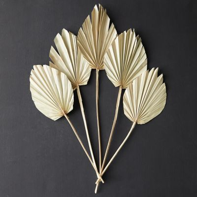 Preserved King Palm Spear Bunch