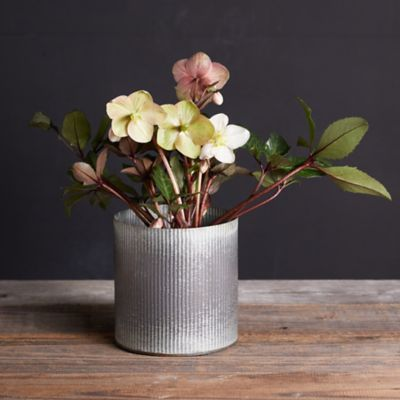 Sally Hellebore, Metal Pot