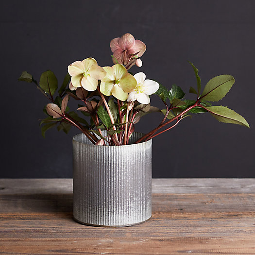 View larger image of Sally Hellebore, Metal Pot