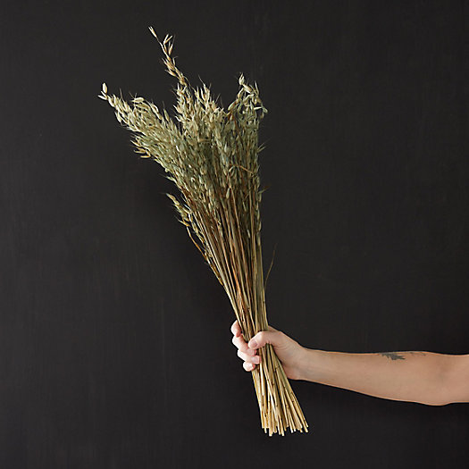 View larger image of Preserved Avena Bunch