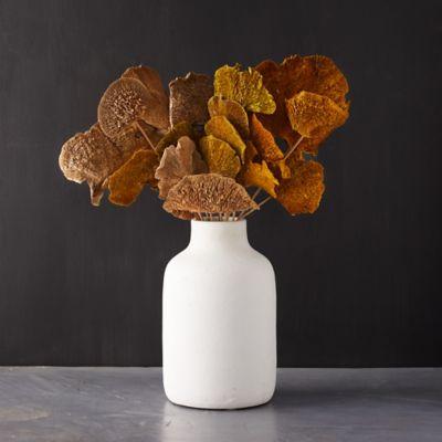 Preserved Mushroom Stems, Neutrals Set