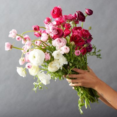 Fresh White + Pink Ranunculus Bunch