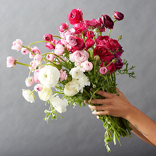 View larger image of Fresh White + Pink Ranunculus Bunch