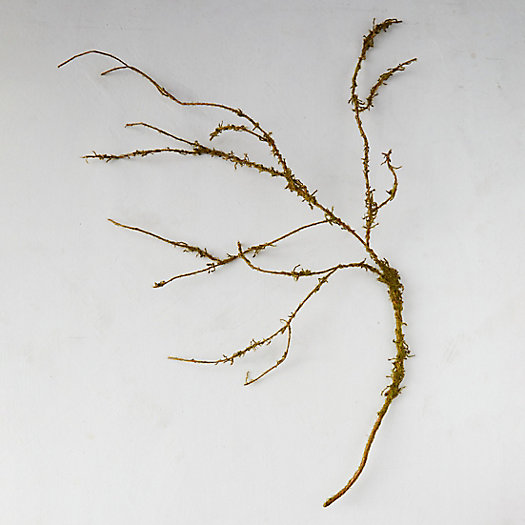 View larger image of Faux Mossy Twig