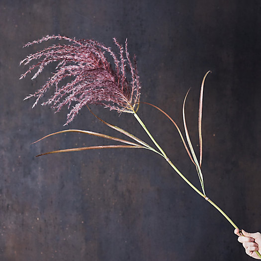View larger image of Faux Grass Plume, Purple