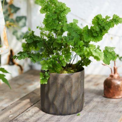 Barranco Ceramic Pot