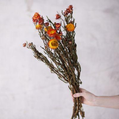 Preserved Helichrysum Mix