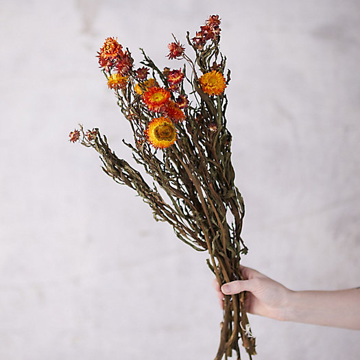 View larger image of Preserved Helichrysum Mix