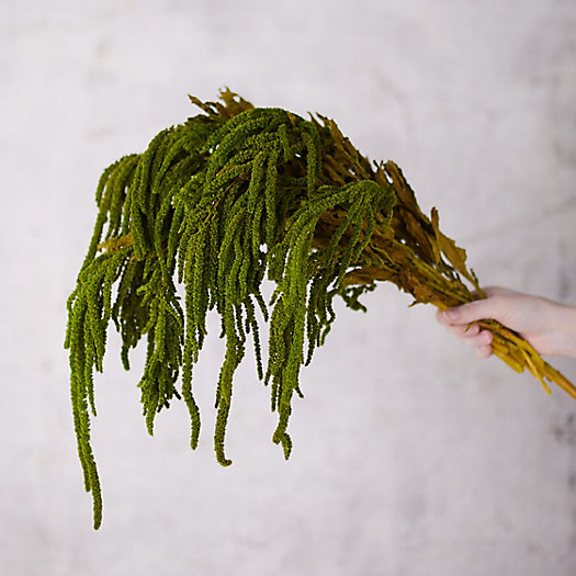 View larger image of Preserved Hanging Amaranthus Bunch