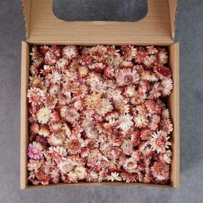 Preserved Strawflower Scatter