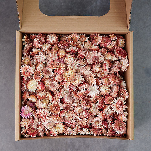View larger image of Preserved Strawflower Scatter
