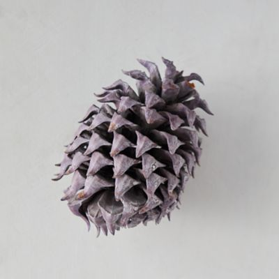 Preserved Coulter Pine Cone