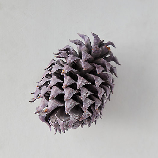 View larger image of Preserved Coulter Pine Cone