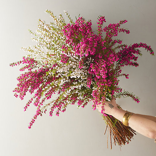 View larger image of Fresh Boronia Bunch